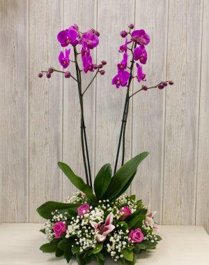 Σύνθεση λουλουδιών με ορχιδέα φαλαίνοψις