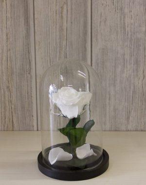 Forever rose λευκό σε γυάλινο θόλο