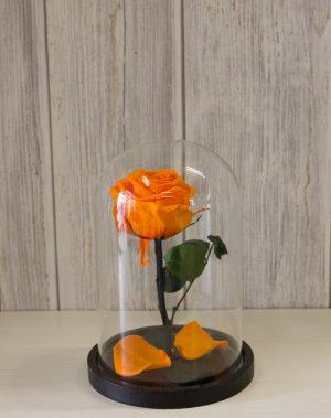 Forever rose πορτοκαλί