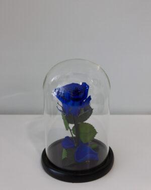 Forever Rose Μπλε